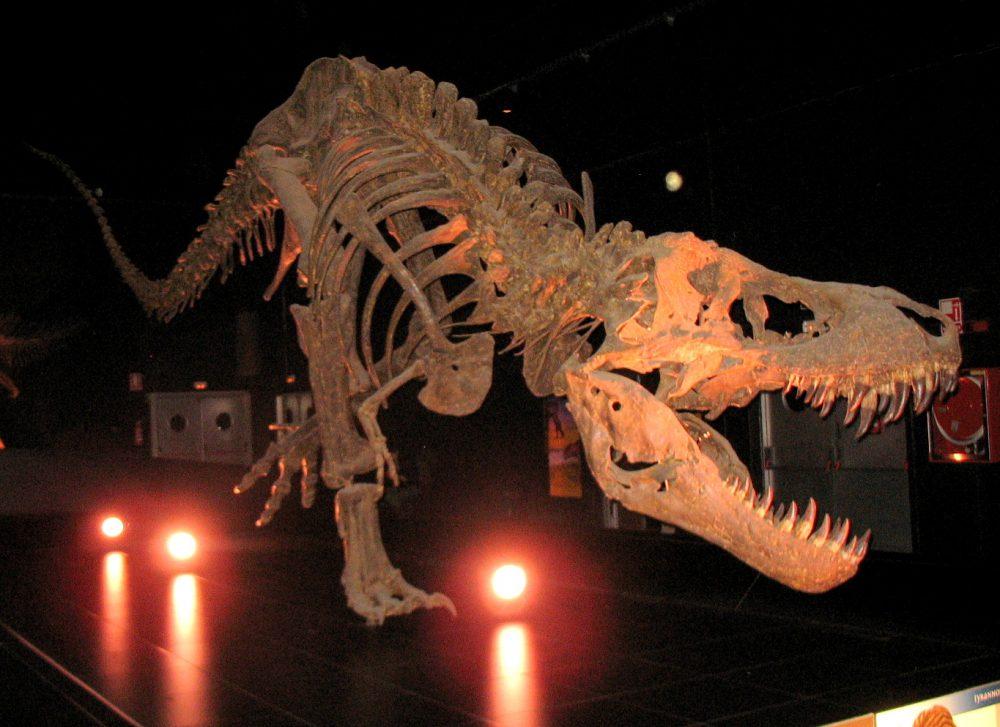 Tyrannosaurus rex (réplica)